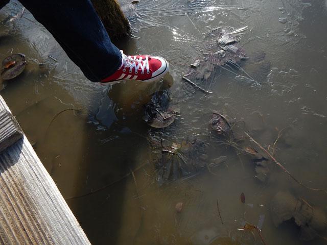 神池の女池6