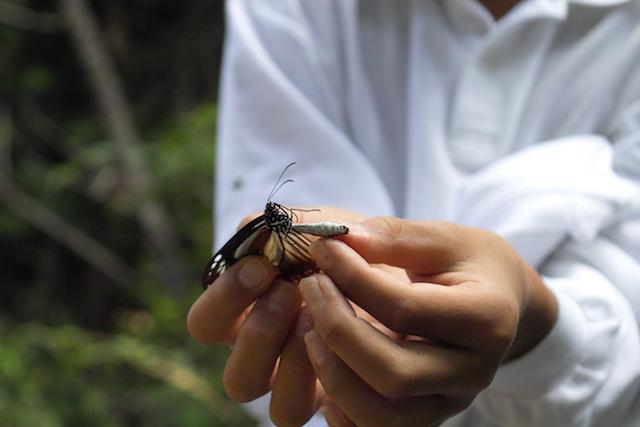 香美市の自然体験教育
