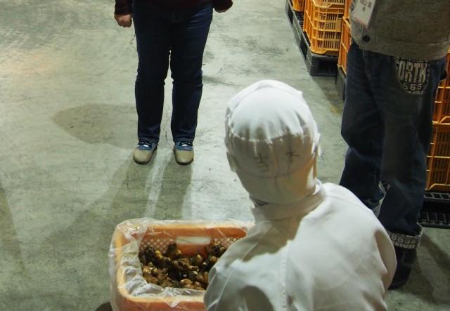 貯蔵庫内で管理している生姜をみせていただく