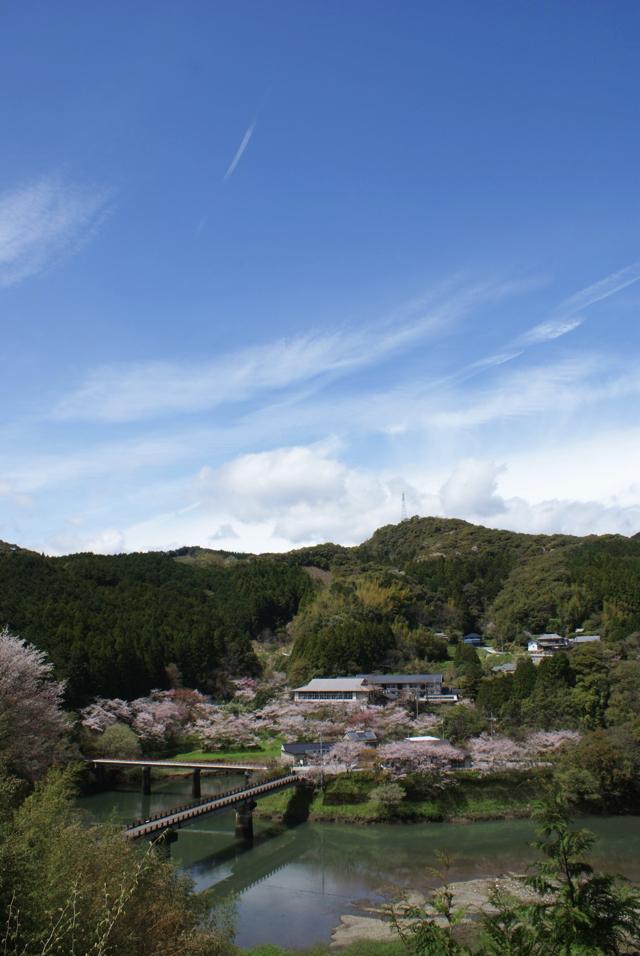 平山の桜2