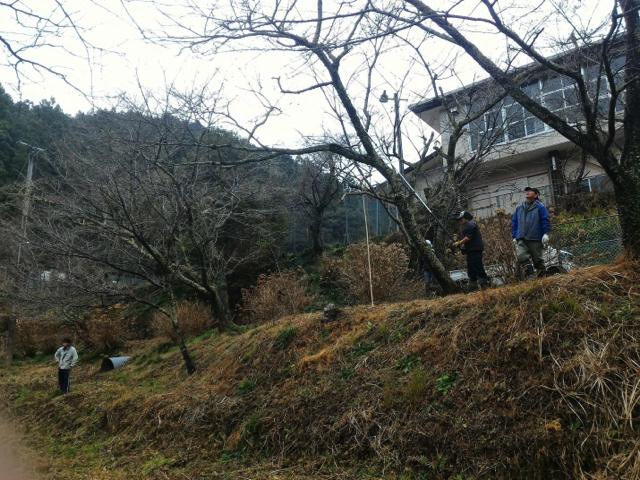 平山の桜7