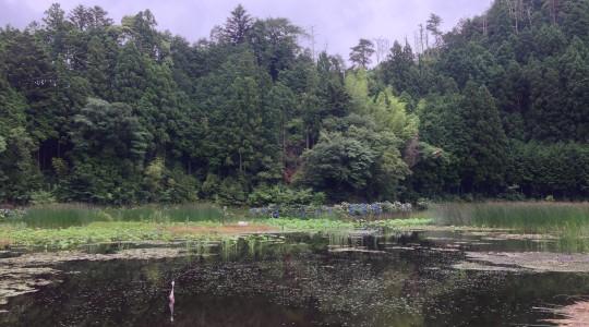 神池の女池
