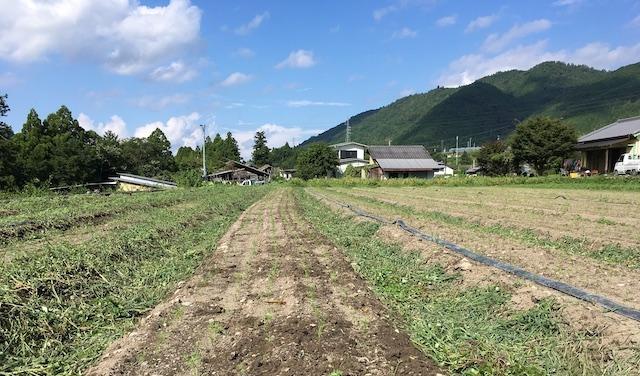 香北町永野にある作業場前の人参畑(2020.08.19)
