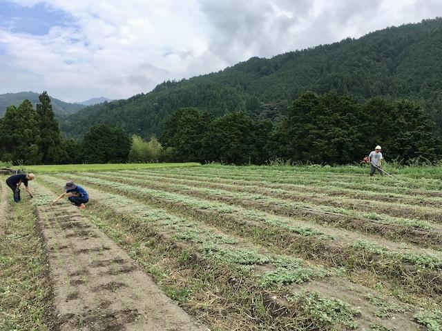 夏の終わり 発芽した人参を救出する草取り作業と畝間の草刈り(2020.08.18)