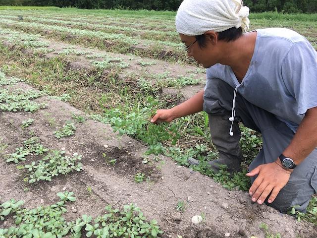 隼人さんは、草取りを伝授しながら、植生や畝の方角の意味なども教えてくれる。 (写真の草は、酷暑の中、畝を高温に熱しても負けないスベリヒユ。食用にする地域もある。)