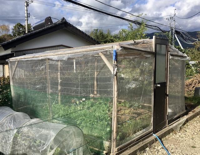 鶏が自由に食べてしまうため、畑の中に鶏&虫よけのハウスも作った。